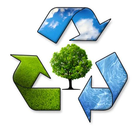 Brazil: Environmental Problems and Solutions Essay - 2085